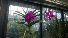Kew Gardens G [].jpg