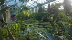 Kew Gardens I [].jpg
